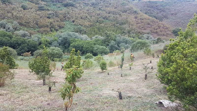 gran canaria  8000 laurel trees