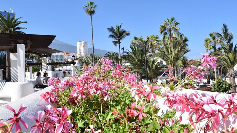 Best Time to Visit Tenerife - When to go for your perfect