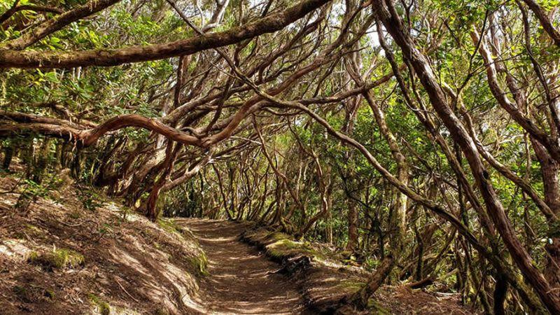 Enchanted forest hike ana tenerife