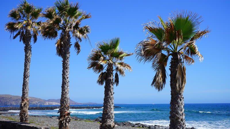 things to do in playa de las americas
